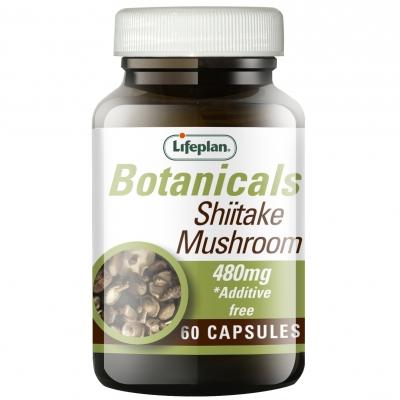 Shiitake Mushroom x 60